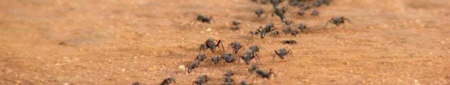 Insecticidas granulados