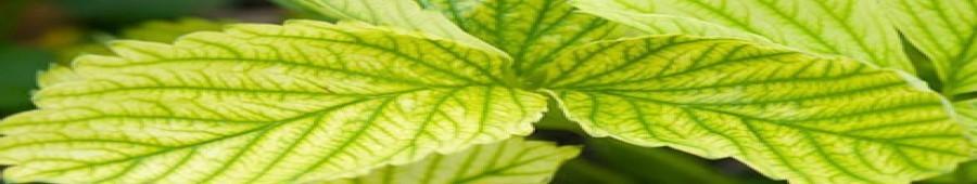 Correctores y abonos foliares